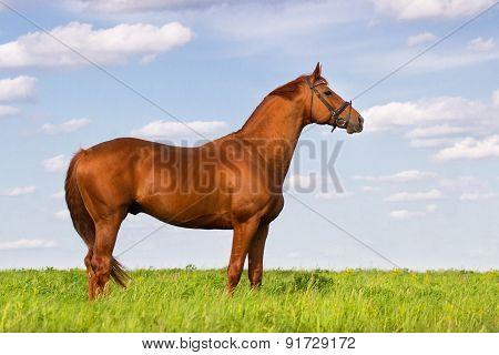 Horse exterior