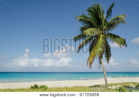 Exotic beach with high palm tree, Caribbean