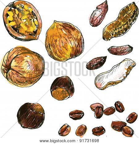 set of watercolor drawing nuts