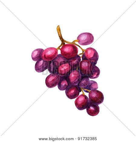 Realistic watercolor illustration grapes isolated on white background vector