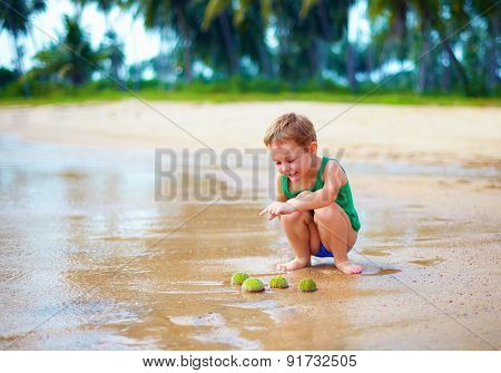Cute Kid, Boy Have Found A Group Of Green Sea Urchins On Sandy Beach