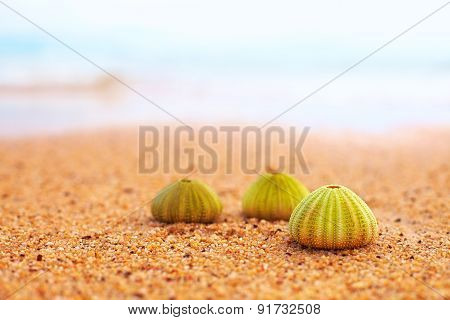 Group Of Green Sea Urchin Shells On Sandy Beach