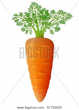Carrot With Leaves Close Up