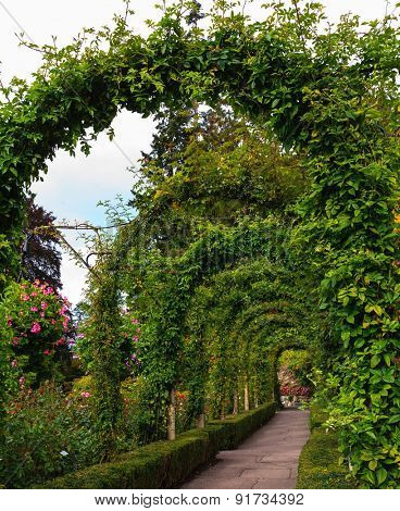 Scenic decorative park Butchart Gardens on Vancouver Island, Canada. Gallery of flowers twined arches