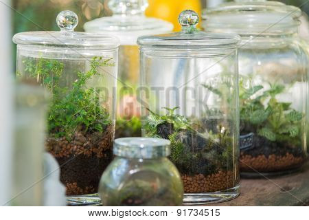 Terrarium, Small Tree In A Bottle