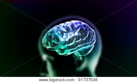 Colorful Blue Brain In Head
