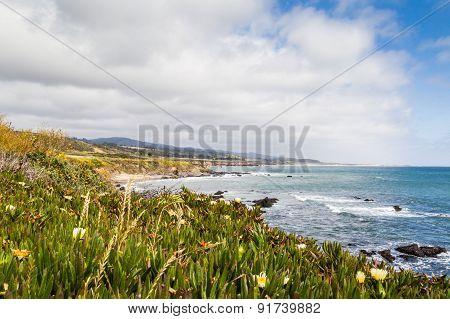 Flowers Ocean And Sky