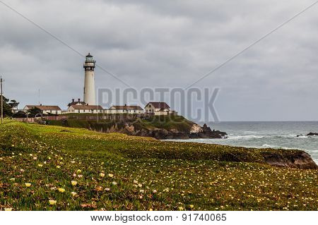 Wildflower And The Pigeon Point Lighthouse Station