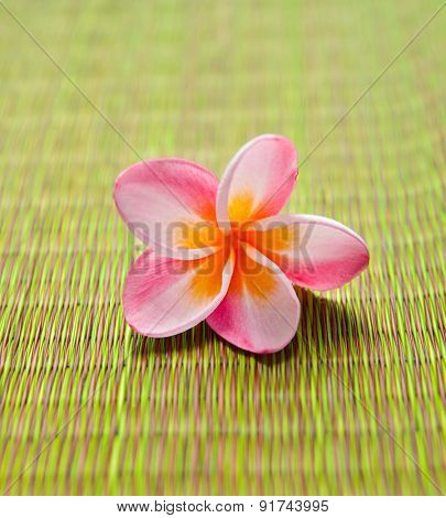 frangipani flower on mat