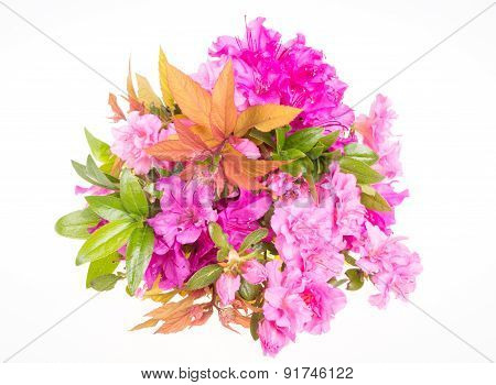Flower bouquet with rhododendron flowers