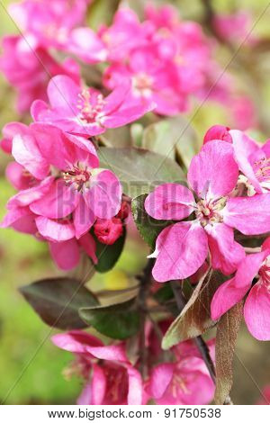Branch of flowering tree, closeup