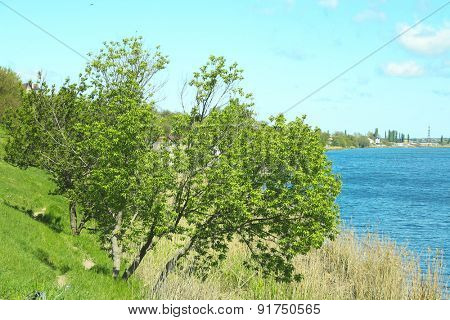 Green tree on river bank over blue sky background