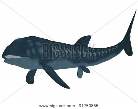 Leedsichthys Fish Over White