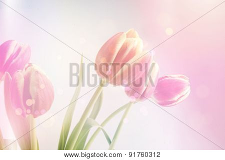 Photograph of tulips with retro effect