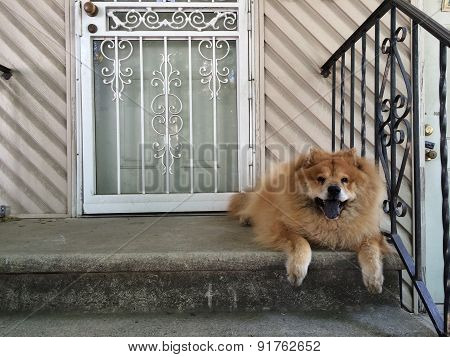 Smiling Guard Dog