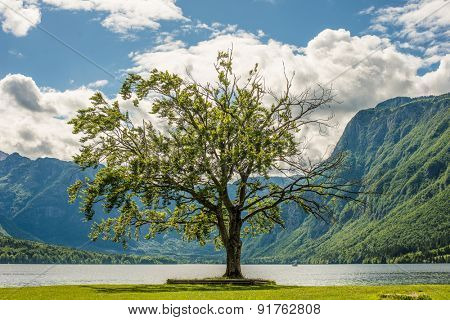 Green tree standing by the lake, beautiful landscape