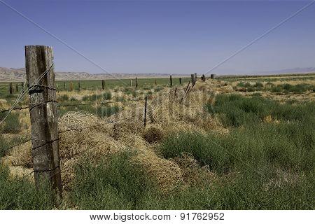 Tumbleweed Frontier