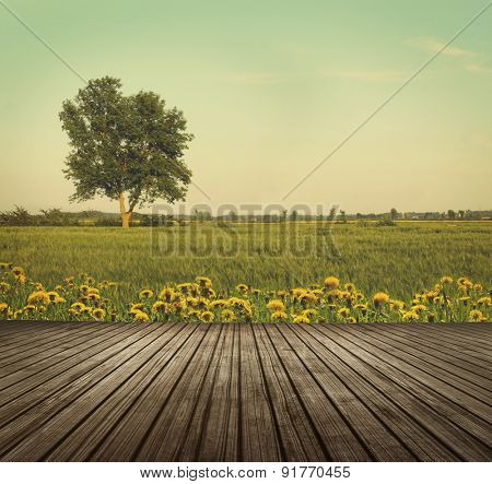Wooden table top in open fields of dandelions with tree in background