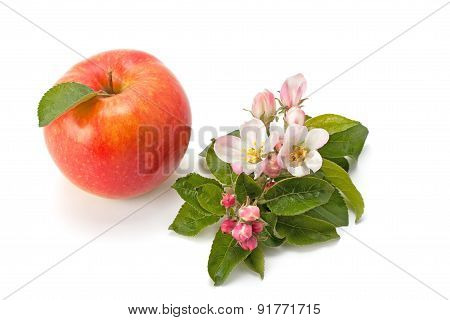 Flowers And Ripe Apple