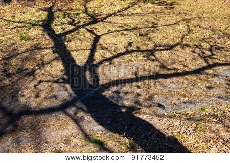Shadow Of The Bare Tree On The Ground