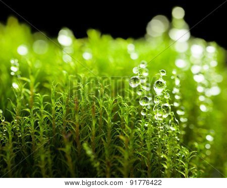 Drops On Mossy Background