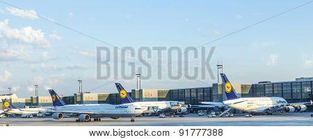 Lufthansa Aircrafts At Terminal 1 In Frankfurt