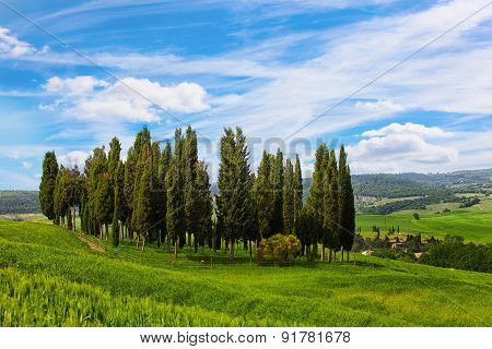 Tuscan Landscape With The Cypresses Growing In A Field And The Beautiful Blue Sky
