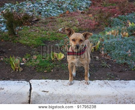 The lonely stray dog in a red collar.