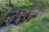 picture of dam  - A little beaver dam at a small river - JPG