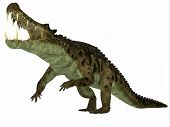 picture of swamps  - Kaprosuchus was a marine reptile that lived in rivers and swamps of the Cretaceous Period - JPG