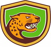 stock photo of growl  - Illustration of a jaguar leopard head facing side growling prowling set inside shield crest on isolated background done in retro style - JPG