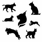 pic of animal silhouette  - Lynx set of black silhouettes - JPG