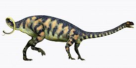 picture of herbivore  - Massospondylus was a herbivorous prosauropod dinosaur that lived during the Jurassic Period of South Africa - JPG