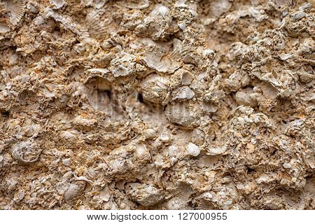 The texture of yellow shell close up
