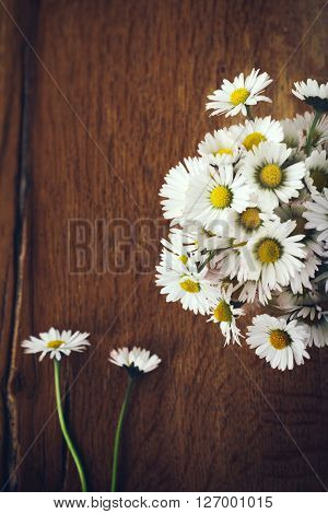 Daisy flowers freshly picked up on a wooden background