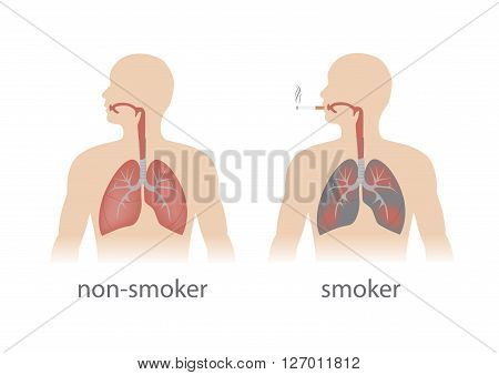 smoker and non smoker lungs comparison. vector format.