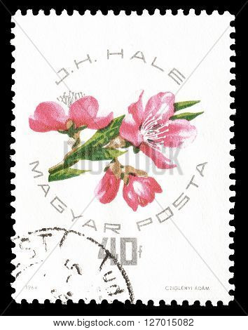HUNGARY - CIRCA 1964 : Cancelled postage stamp printed by Hungary, that shows Blossoms.