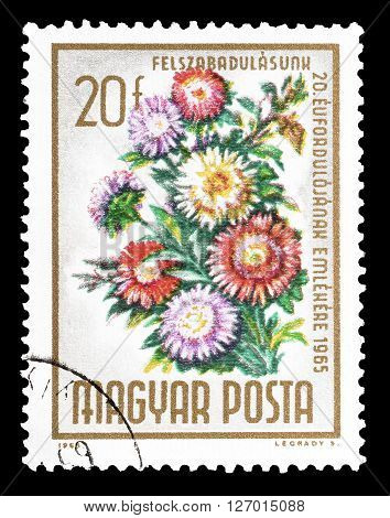 HUNGARY - CIRCA 1965 : Cancelled postage stamp printed by Hungary, that shows Chrysanthemums.
