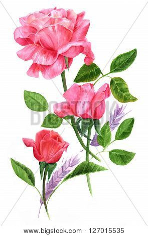 A bouquet of three tender pink and red roses with green leaves and purple spikelets in the background hand painted in watercolor in the style of vintage botanical art; a floral vignette for design