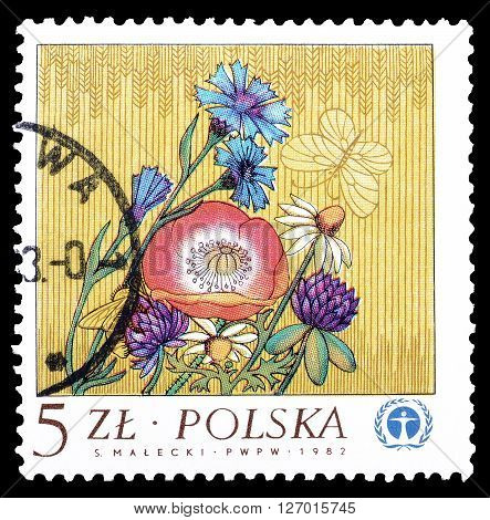 POLAND- CIRCA 1983 : Cancelled postage stamp printed by Poland, that shows Wild flowers.