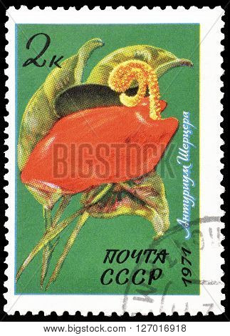 SOVIET UNION - CIRCA 1971 : Cancelled postage stamp printed by Soviet Union, that shows Tropical flower.