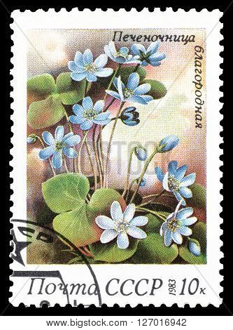 SOVIET UNION - CIRCA 1983 : Cancelled postage stamp printed by Soviet Union, that shows Common Hepatica.