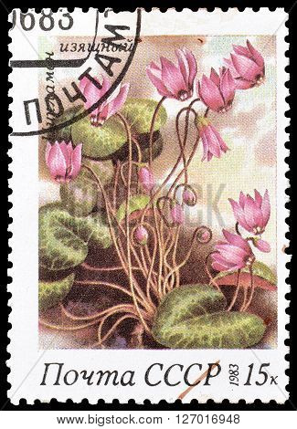 SOVIET UNION - CIRCA 1983 : Cancelled postage stamp printed by Soviet Union, that shows Cyclamen elegans.