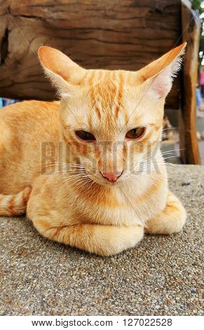 Close up of brown cat on the ground