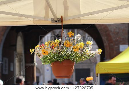 Closeup of flowers with the Ferrara cathedral background