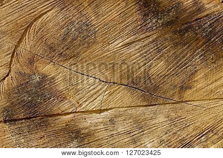 Old tree trunk texture, very detailed