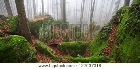 Misty autumn forest with mossy rocks and ground covered by fallen leaves