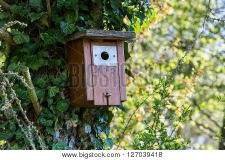 Birdhouse In A Swiss Forest