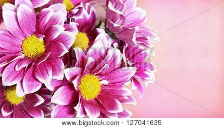 Pink aster flowers corner arrangement on pink background