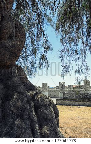 View to pillars of ancient Toltec civilization behind old tree